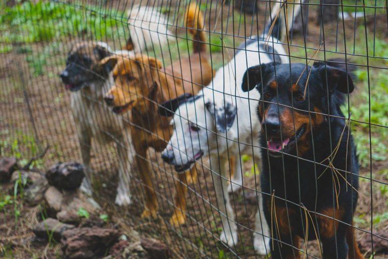 Hunde til salg